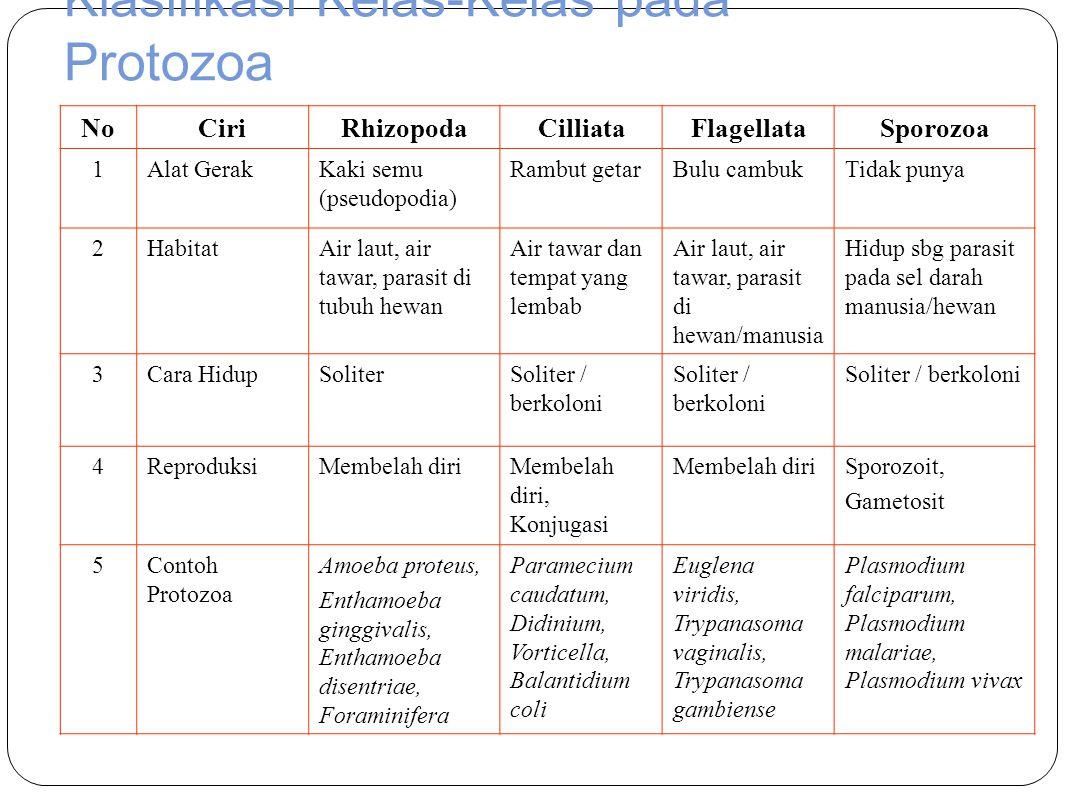 Klasifikasi Kelas-Kelas pada Protozoa