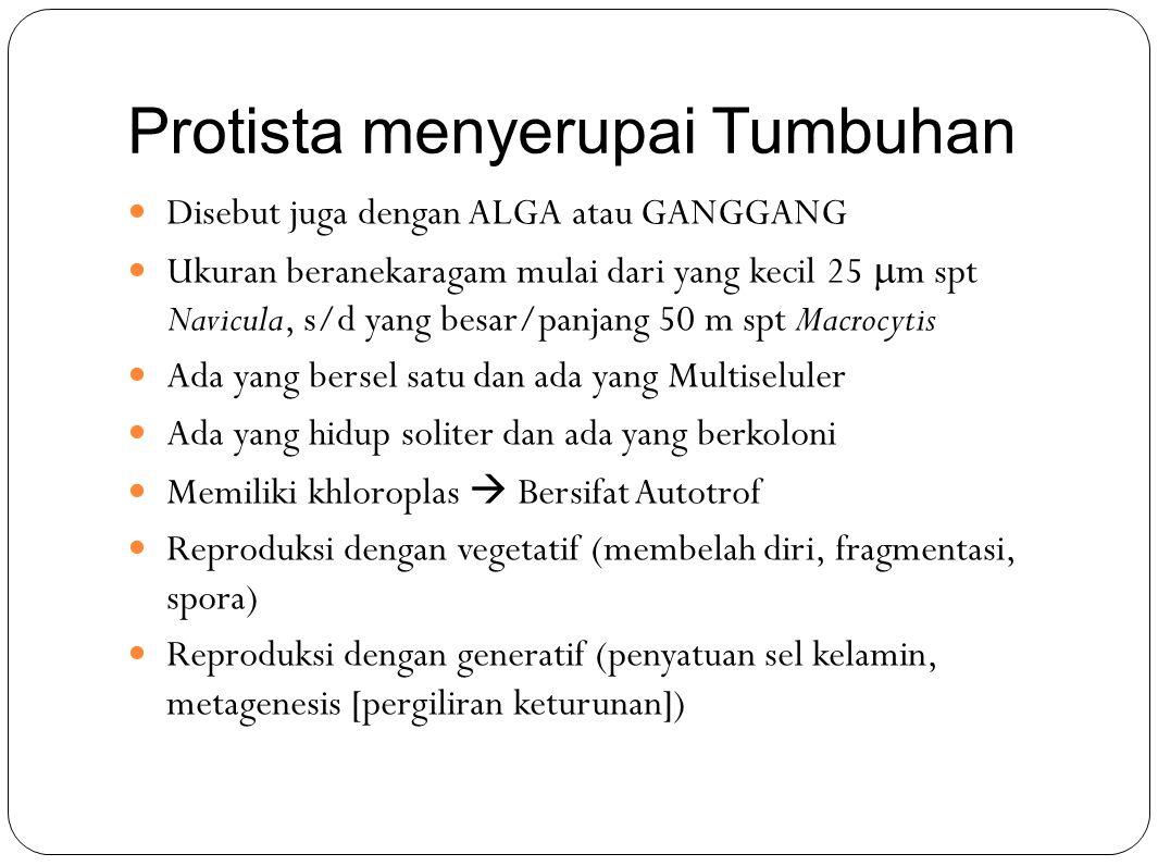 Protista menyerupai Tumbuhan