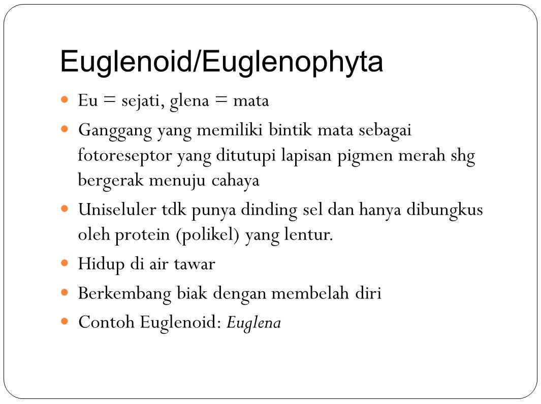Euglenoid/Euglenophyta