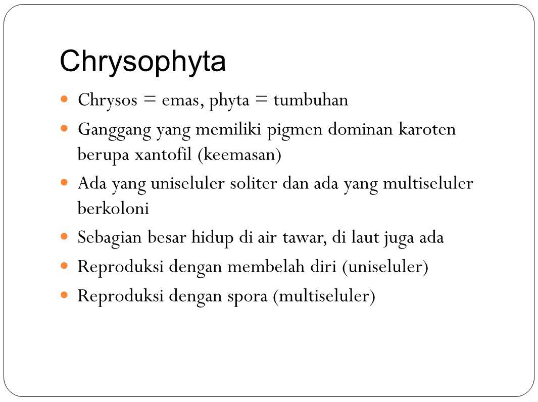 Chrysophyta Chrysos = emas, phyta = tumbuhan