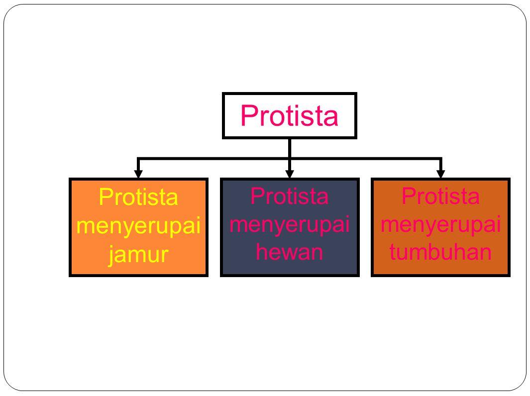 Protista Protista menyerupai jamur Protista menyerupai hewan