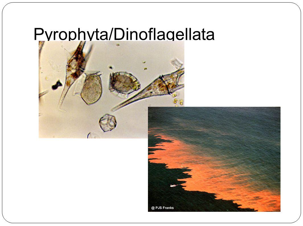 Pyrophyta/Dinoflagellata