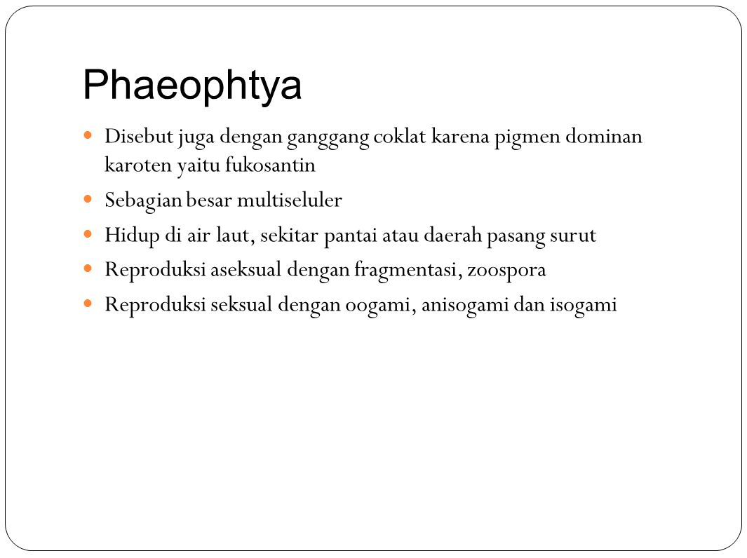 Phaeophtya Disebut juga dengan ganggang coklat karena pigmen dominan karoten yaitu fukosantin. Sebagian besar multiseluler.