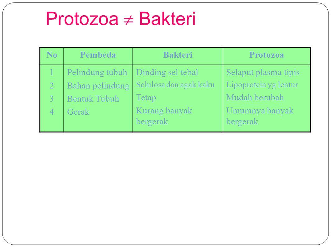 Protozoa  Bakteri No Pembeda Bakteri Protozoa 1 2 3 4 Pelindung tubuh
