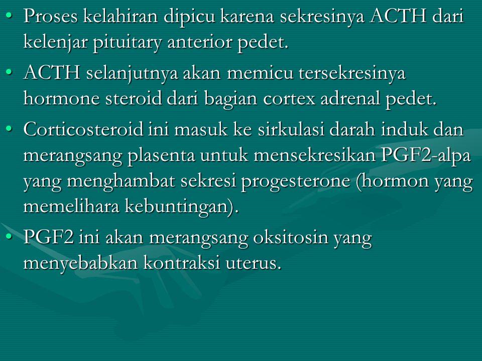 Proses kelahiran dipicu karena sekresinya ACTH dari kelenjar pituitary anterior pedet.