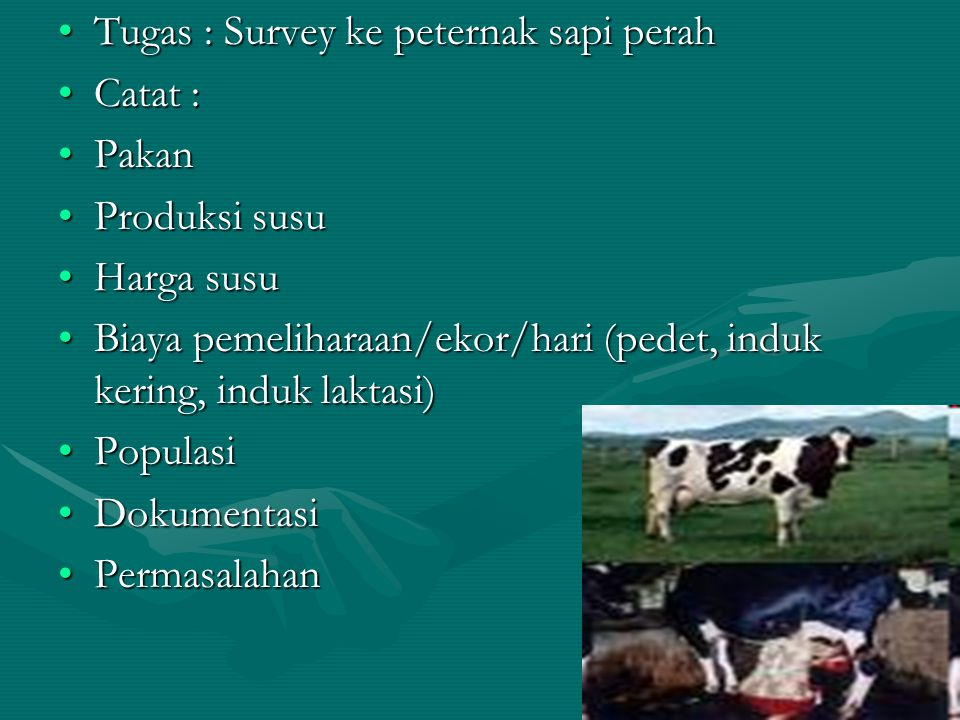 Tugas : Survey ke peternak sapi perah