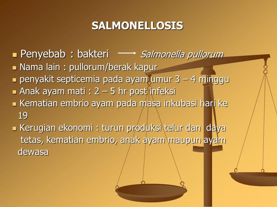 Penyebab : bakteri Salmonella pullorum