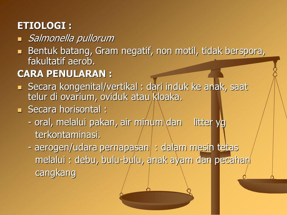 ETIOLOGI : Salmonella pullorum. Bentuk batang, Gram negatif, non motil, tidak berspora, fakultatif aerob.