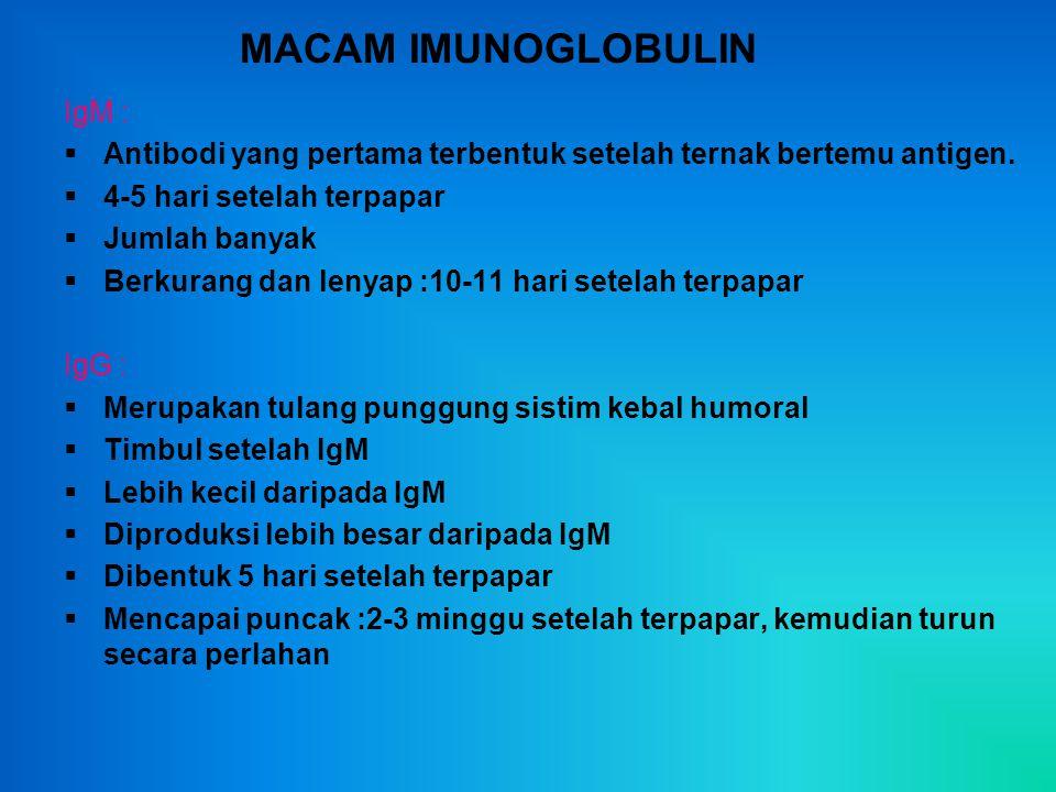 MACAM IMUNOGLOBULIN IgM :