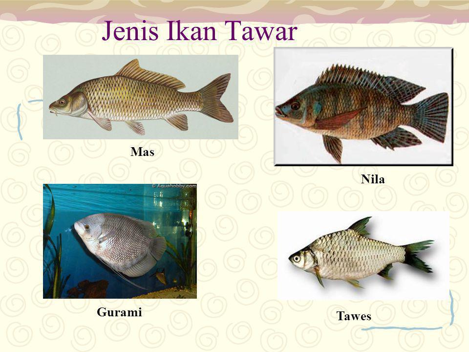 Jenis Ikan Tawar Mas Nila Gurami Tawes