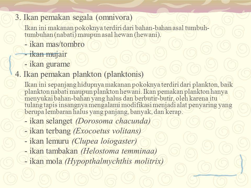 3. Ikan pemakan segala (omnivora)