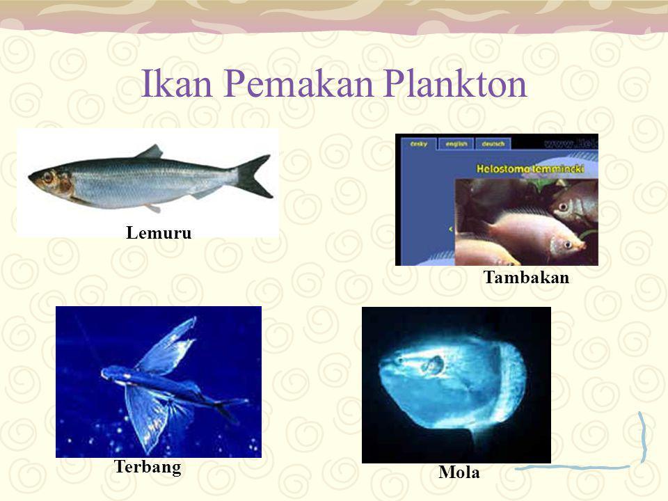 Ikan Pemakan Plankton Lemuru Tambakan Terbang Mola
