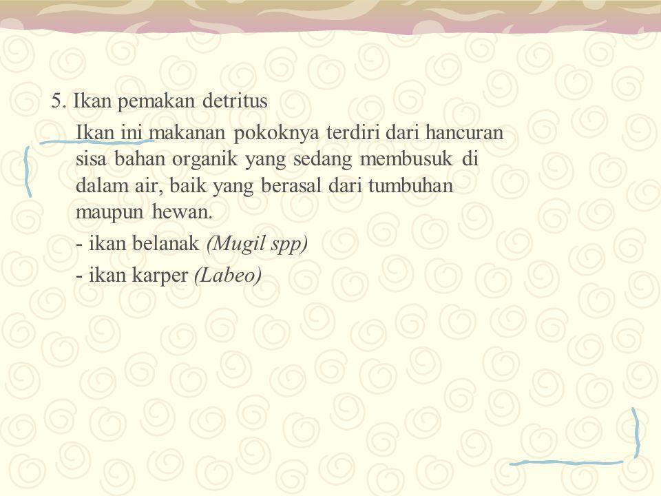 5. Ikan pemakan detritus