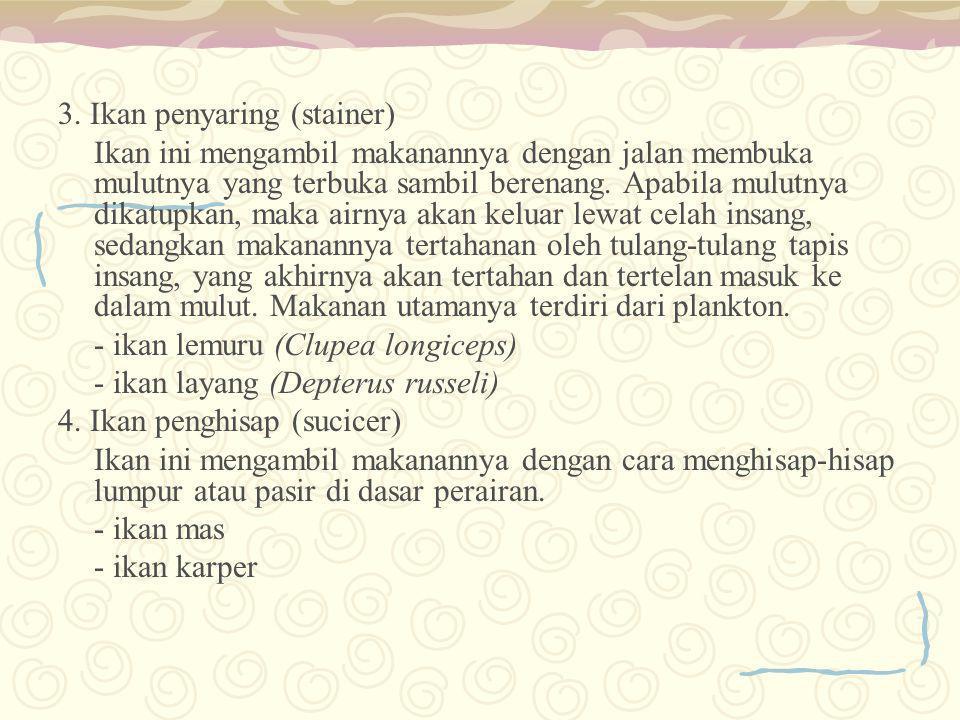 3. Ikan penyaring (stainer)
