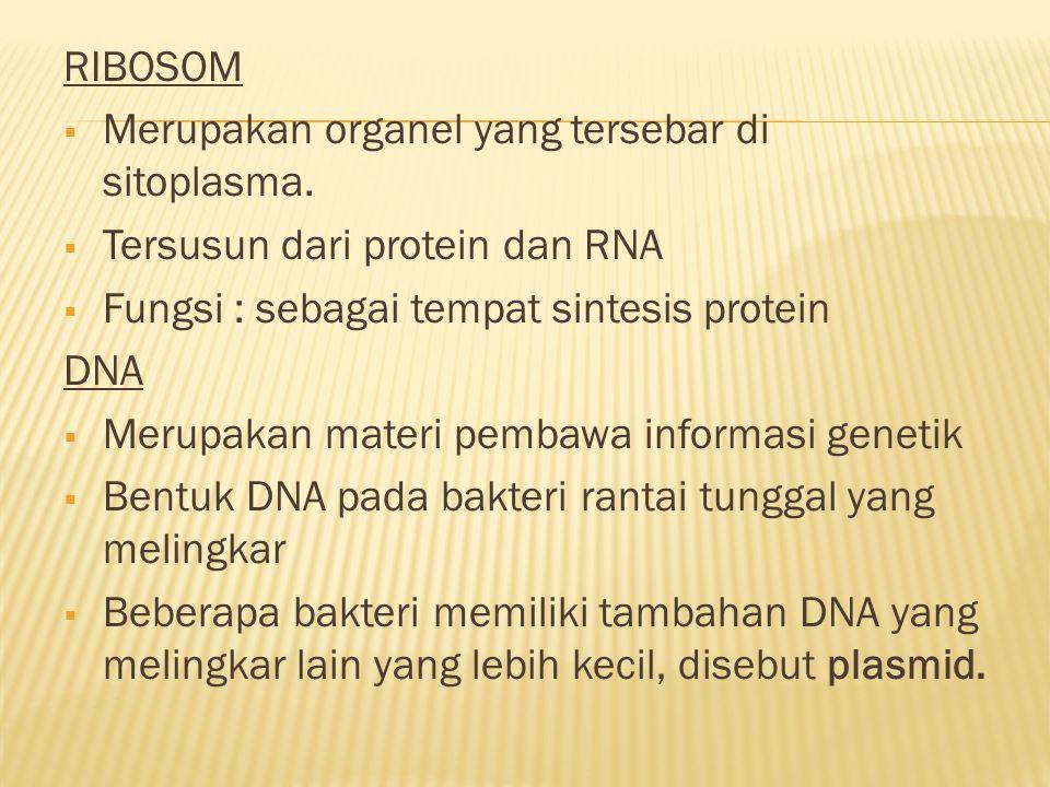 RIBOSOM Merupakan organel yang tersebar di sitoplasma. Tersusun dari protein dan RNA. Fungsi : sebagai tempat sintesis protein.