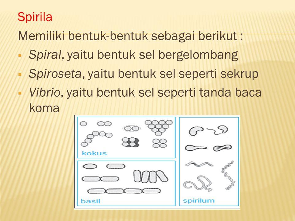 Spirila Memiliki bentuk-bentuk sebagai berikut : Spiral, yaitu bentuk sel bergelombang. Spiroseta, yaitu bentuk sel seperti sekrup.