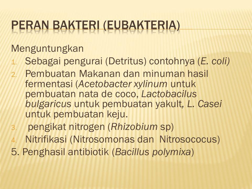 Peran Bakteri (Eubakteria)