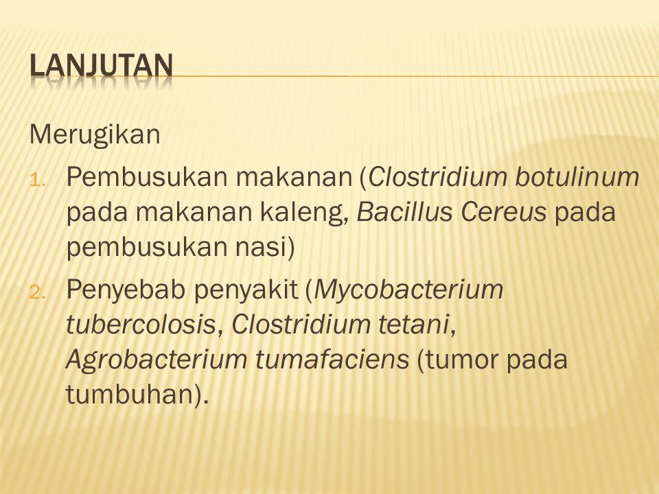 Lanjutan Merugikan. Pembusukan makanan (Clostridium botulinum pada makanan kaleng, Bacillus Cereus pada pembusukan nasi)