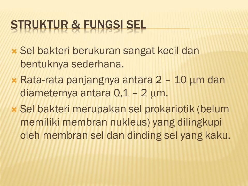 STRUKTUR & FUNGSI SEL Sel bakteri berukuran sangat kecil dan bentuknya sederhana.
