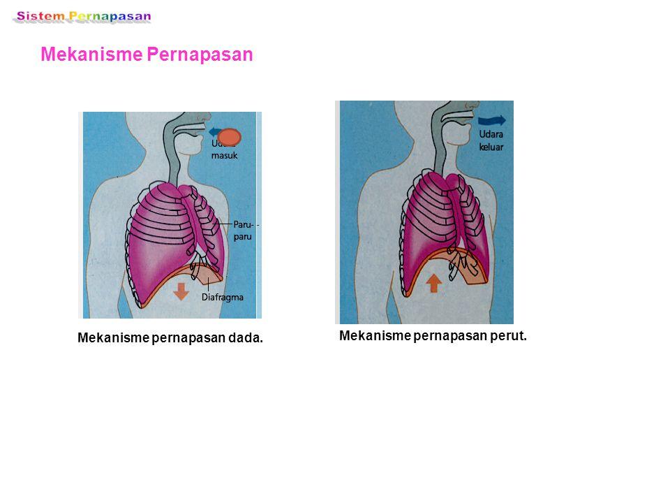 Mekanisme pernapasan dada. Mekanisme pernapasan perut.