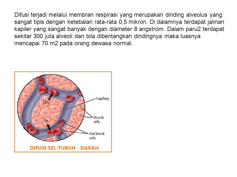 Difusi terjadi melalui membran respirasi yang merupakan dinding alveolus yang sangat tipis dengan ketebalan rata-rata 0,5 mikron.