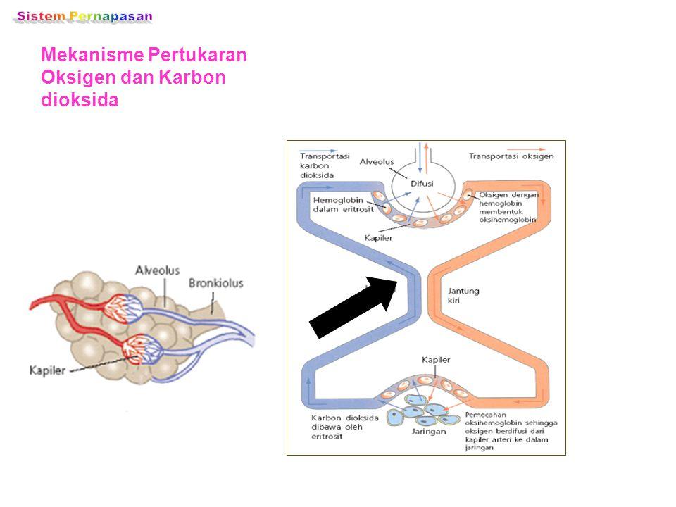 Sistem Pernapasan Mekanisme Pertukaran Oksigen dan Karbon dioksida