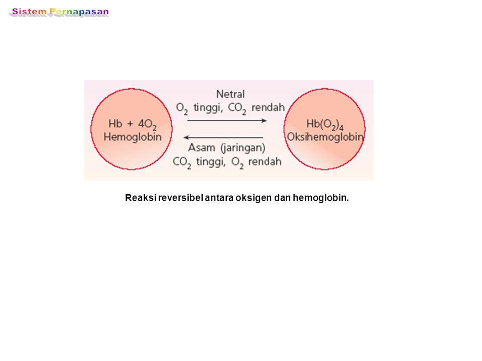 Reaksi reversibel antara oksigen dan hemoglobin.