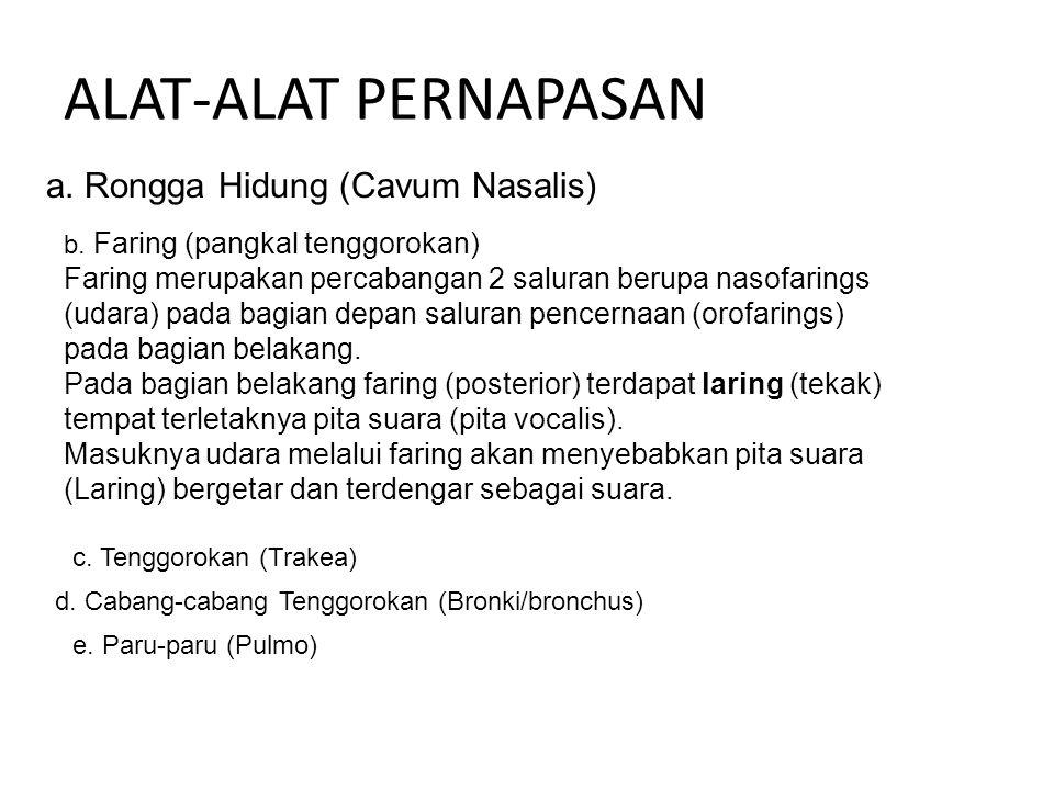 ALAT-ALAT PERNAPASAN a. Rongga Hidung (Cavum Nasalis)