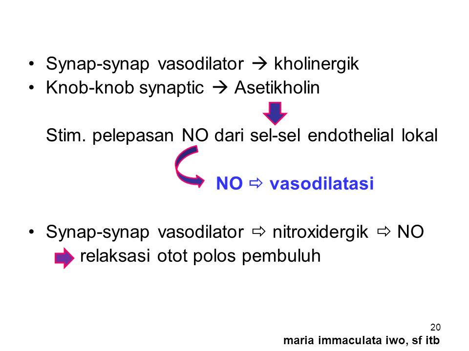 Synap-synap vasodilator  kholinergik Knob-knob synaptic  Asetikholin