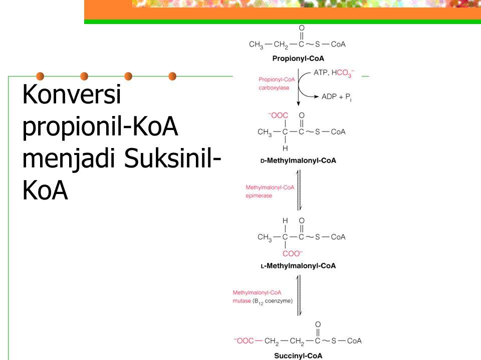 Konversi propionil-KoA menjadi Suksinil-KoA