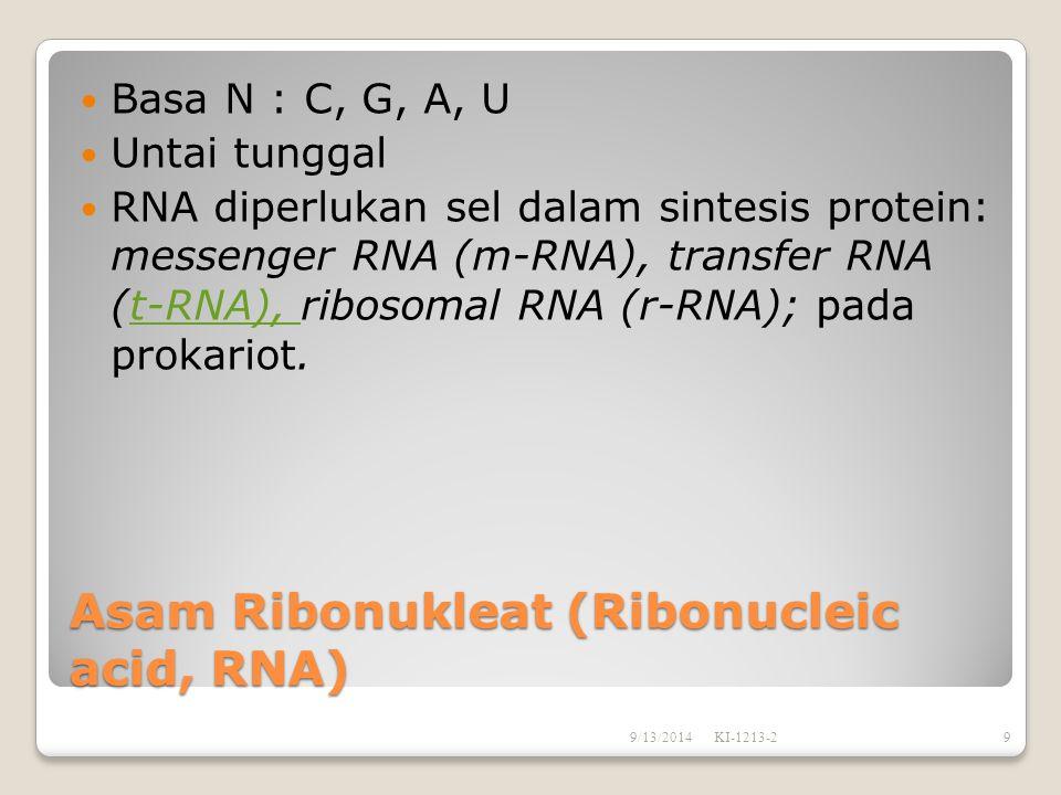 Asam Ribonukleat (Ribonucleic acid, RNA)