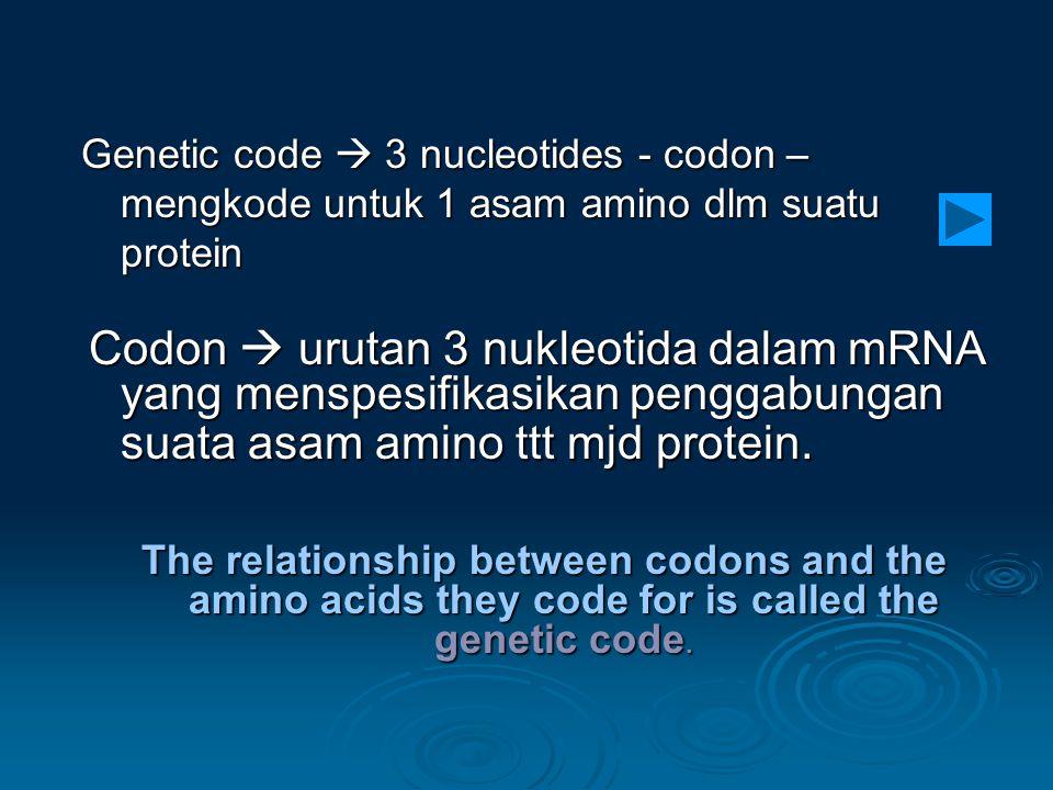 Genetic code  3 nucleotides - codon – mengkode untuk 1 asam amino dlm suatu protein