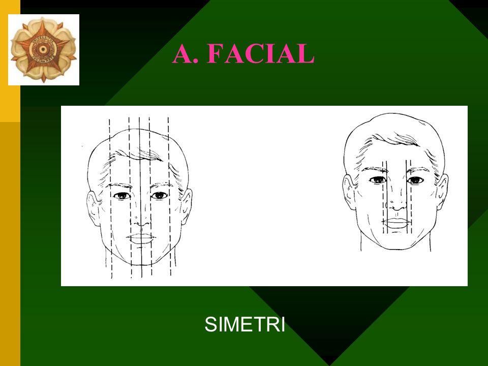 A. FACIAL SIMETRI