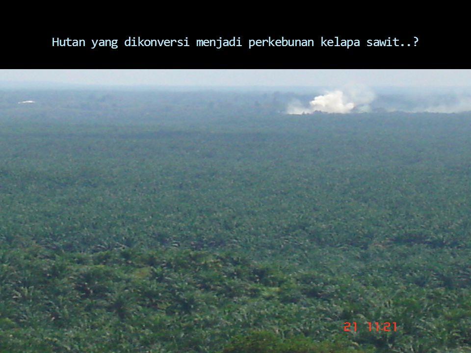 Hutan yang dikonversi menjadi perkebunan kelapa sawit..