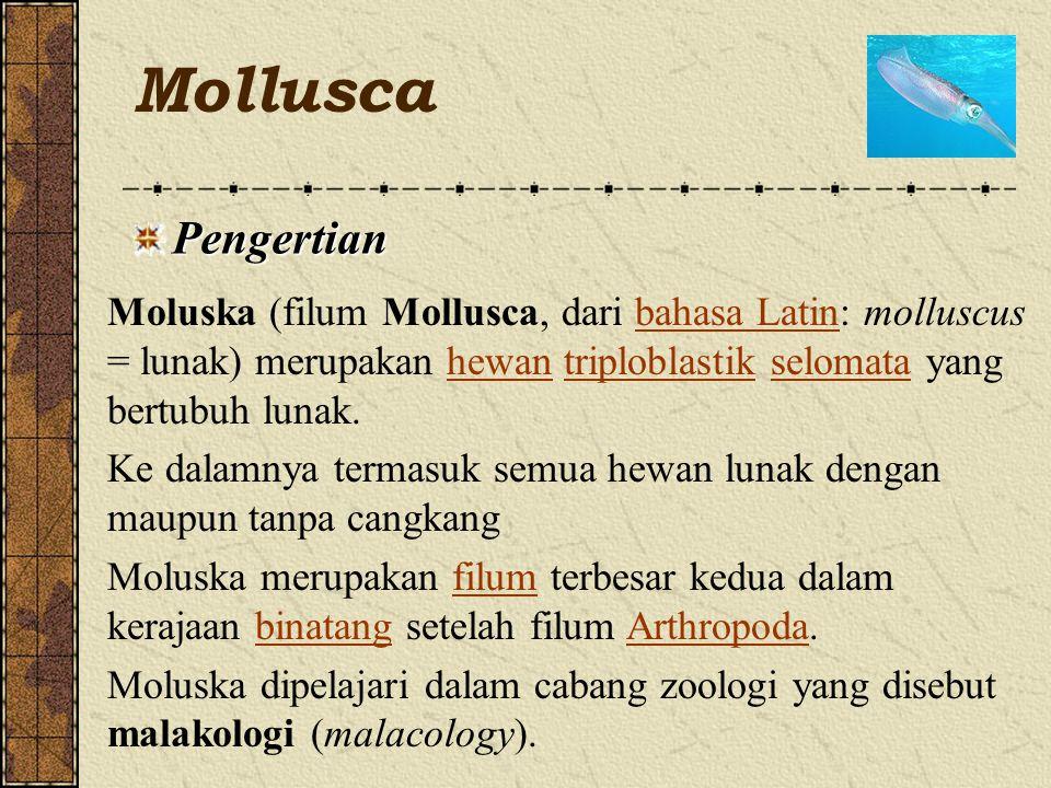 Mollusca Pengertian. Moluska (filum Mollusca, dari bahasa Latin: molluscus = lunak) merupakan hewan triploblastik selomata yang bertubuh lunak.
