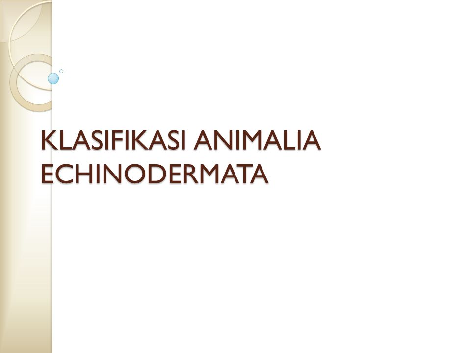 KLASIFIKASI ANIMALIA ECHINODERMATA