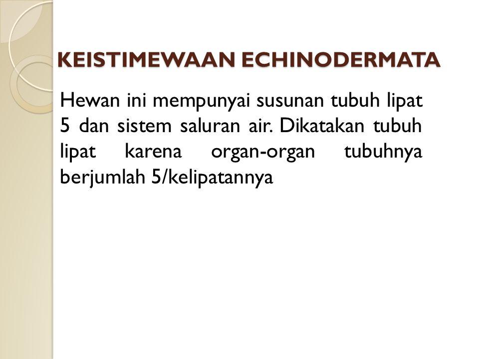 KEISTIMEWAAN ECHINODERMATA