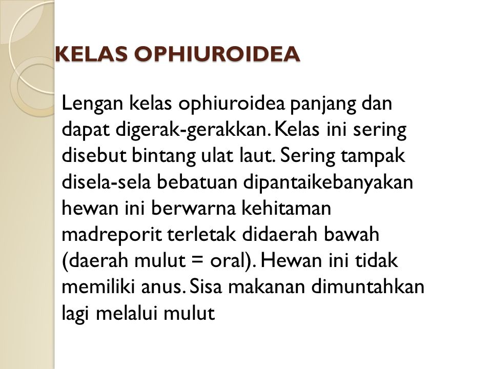 KELAS OPHIUROIDEA