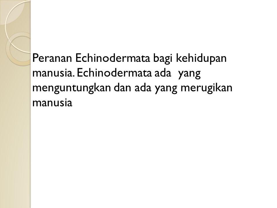 Peranan Echinodermata bagi kehidupan manusia