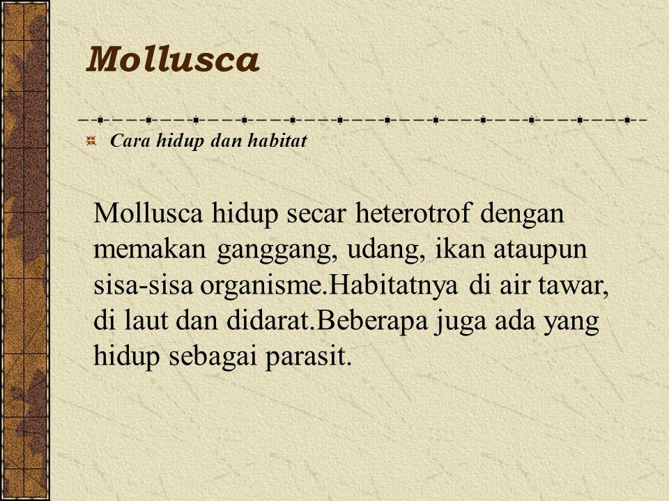 Mollusca Cara hidup dan habitat.