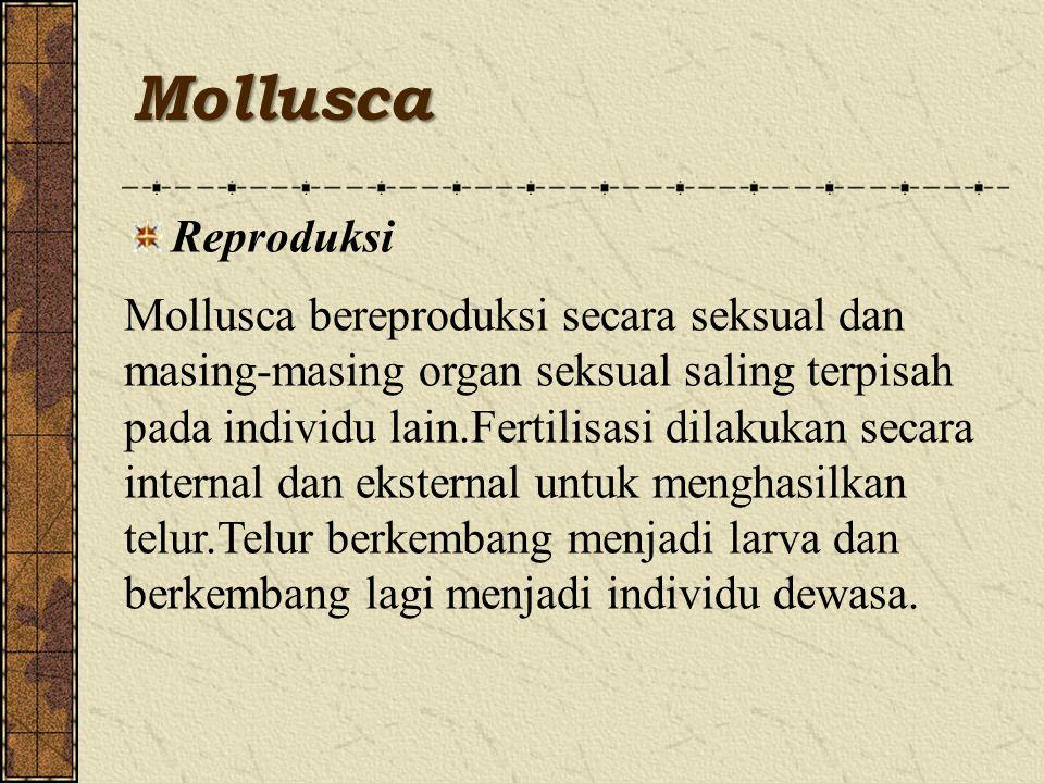 Mollusca Reproduksi.