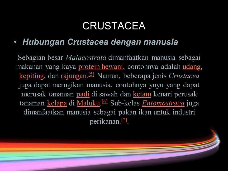 CRUSTACEA Hubungan Crustacea dengan manusia