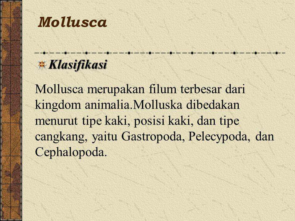 Mollusca Klasifikasi.