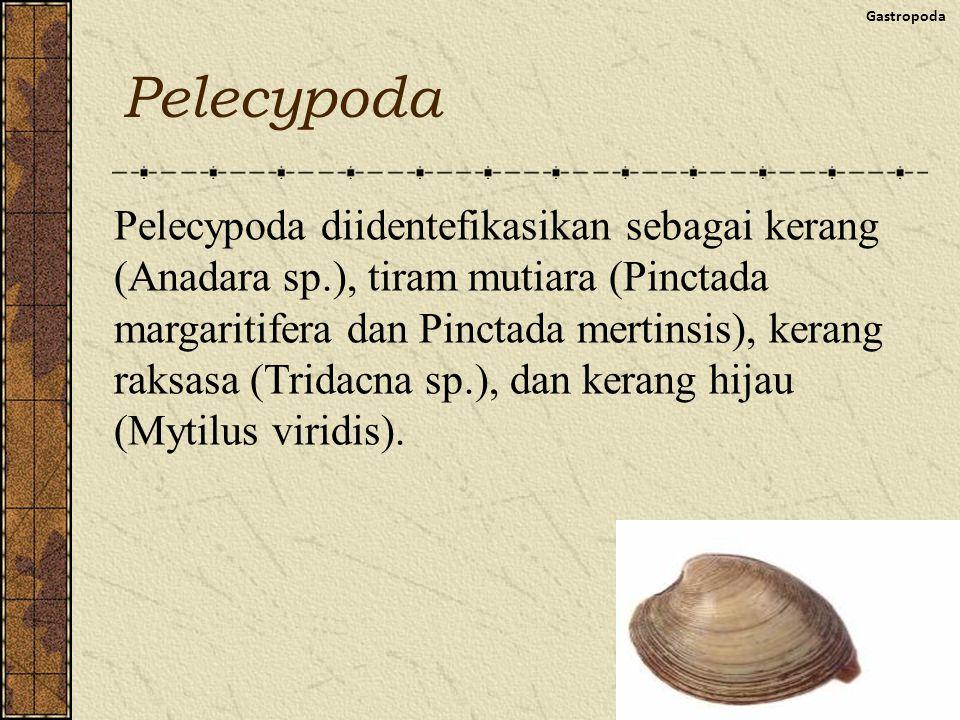 Gastropoda Pelecypoda.