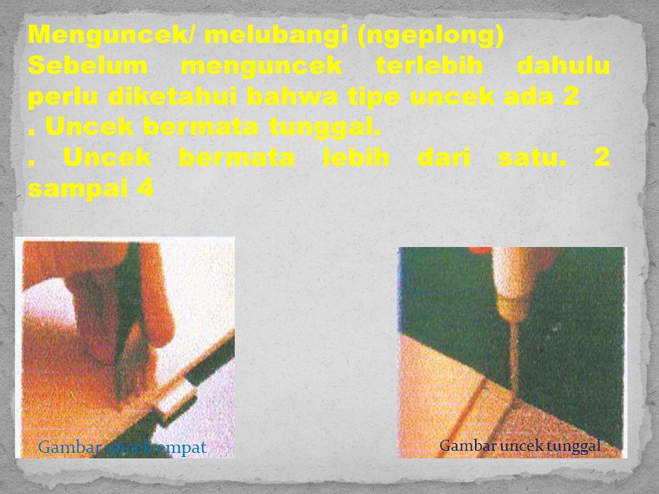 Menguncek/ melubangi (ngeplong)