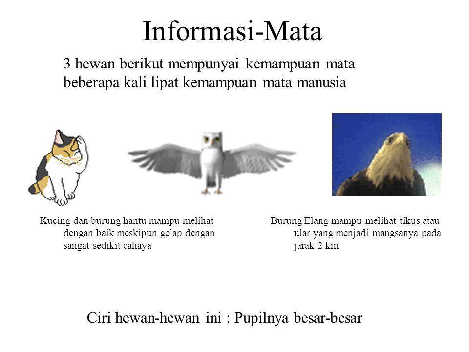 Informasi-Mata 3 hewan berikut mempunyai kemampuan mata beberapa kali lipat kemampuan mata manusia.