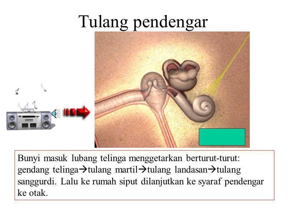 Tulang pendengar