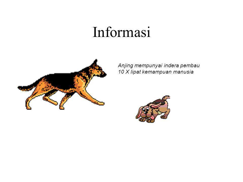 Informasi Anjing mempunyai indera pembau 10 X lipat kemampuan manusia