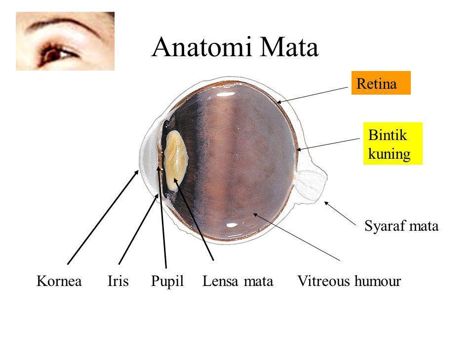 Anatomi Mata Retina Bintik kuning Syaraf mata Kornea Iris Pupil