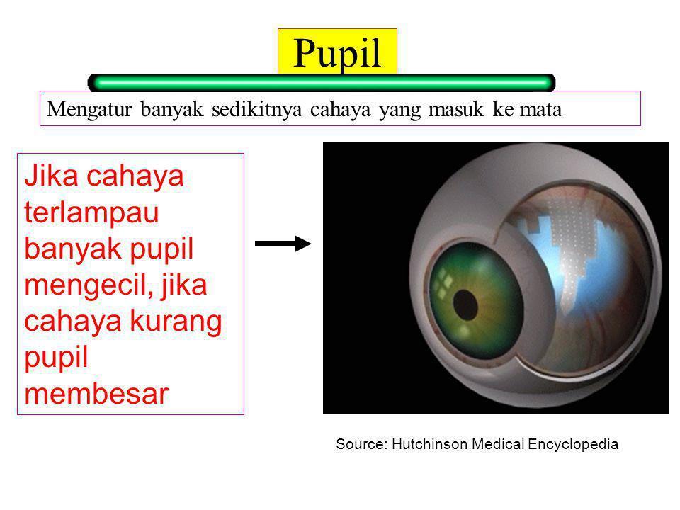 Pupil Mengatur banyak sedikitnya cahaya yang masuk ke mata. Jika cahaya terlampau banyak pupil mengecil, jika cahaya kurang pupil membesar.
